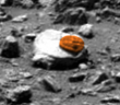 Mars photo discovers trilobite creature