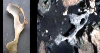 mars rover finds bones on mars
